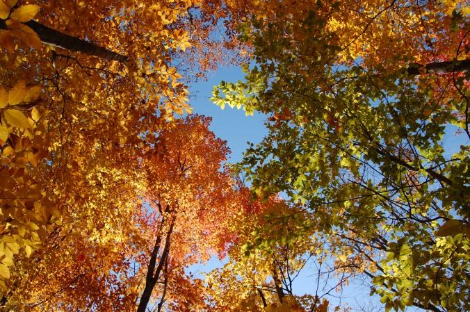 fall foliage in Algonquin