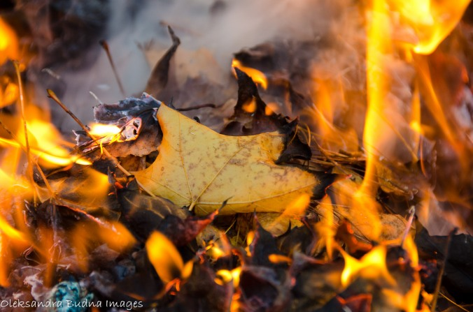 fall leaf bruning in the fire