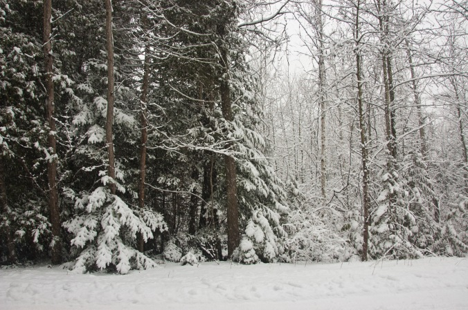 snow-covered forest in the winter
