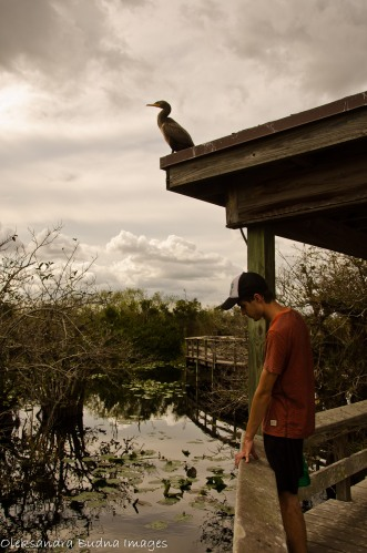 anhinga trail at everglades