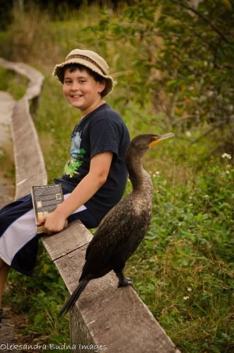 Anhinga trails at everglades