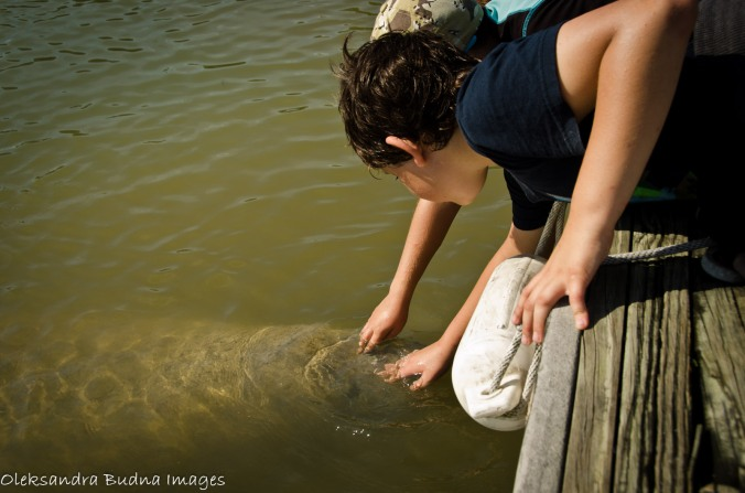 patting a manatee