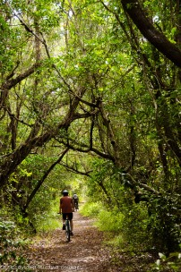 biking snake bight trail at Everglades