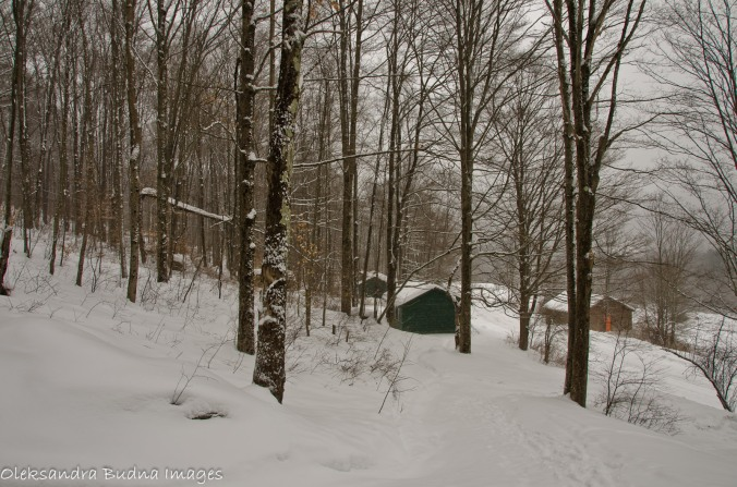 Allegany state park, Congdon trail in the winter