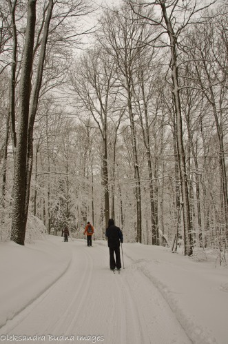 skiing at Allegany State Park