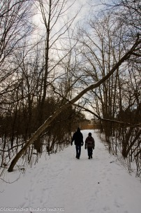 walking in the woods in the winter