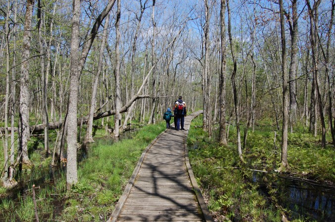 boardwalk at Presqu'ile Provincial park