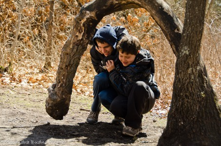 kids under an arched tree