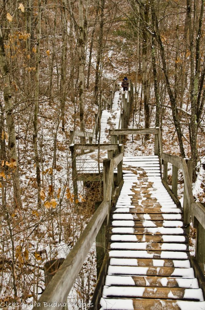 Nipissig trail at Pinery