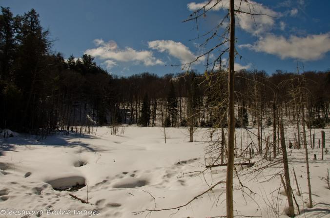 Bat Lake trail