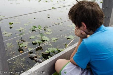 kid watching turtles