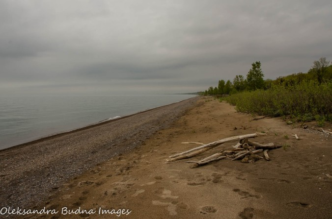 beach at Point Pelee National Park