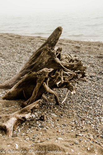 driftwood on the beach at Wheatley Provincial park