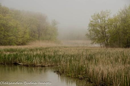 creek at Wheatley Provincial park