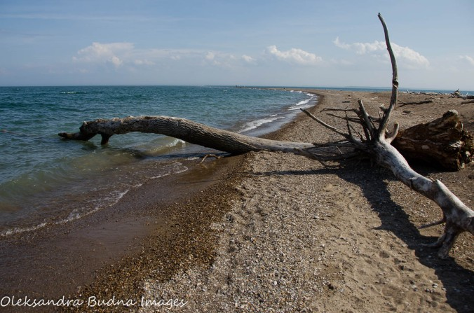 beach at Fish Point Reserve on Pelee Island