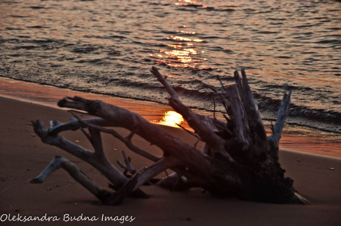 sunset on the driftwood beach
