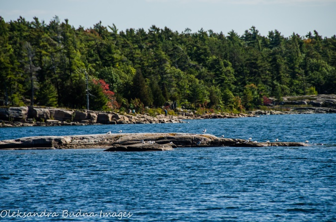 rocky island at Killbear Provincial Park