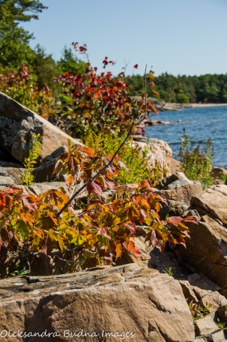 fall foliage at Killbear Provincial Park