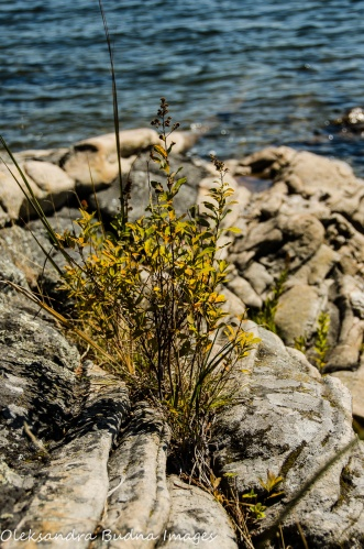 rocks and plants at Killbear Provincial Park