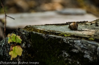 acorn on a stump at Killbear Provincial Park