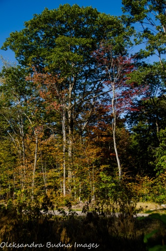 fall at Killbear Provincial Park