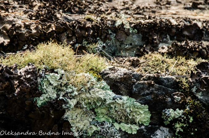 moss and lichens in Quetico