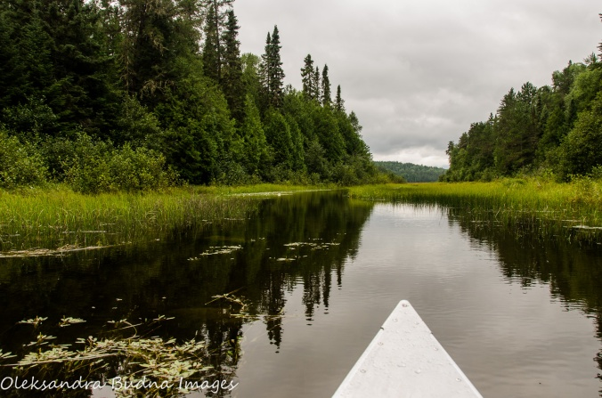 paddling down McAlpine Creek in Quetico