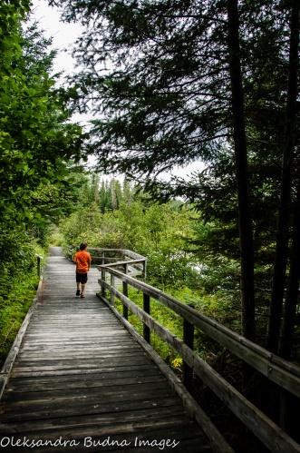 Boardwalk at Quetico Provincial Park