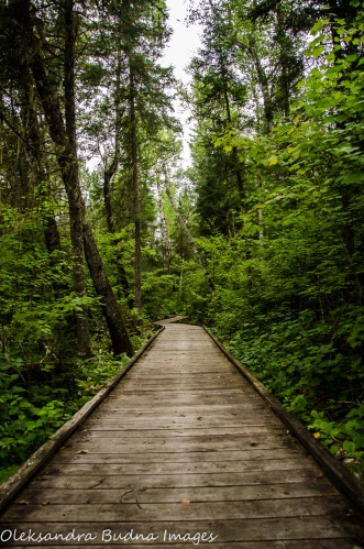 Boardwalk at Quetico Provincial Park