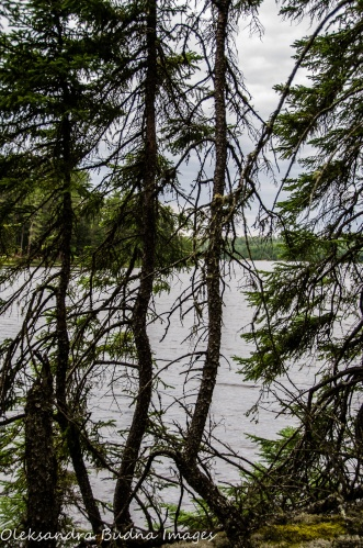 view of the lake through the forest at Quetico