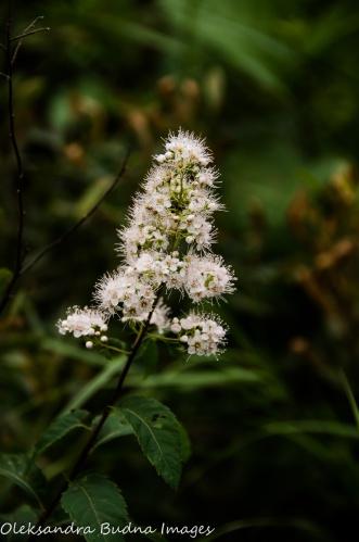 plant at Quetico Provincial Park