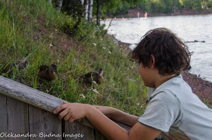watching ducks