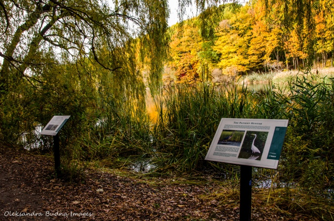 interpretive panels near Grenadier Pond in High Park