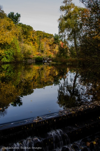 High Park in the fall