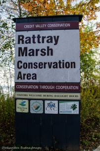 Rattray Marsh in Mississauga