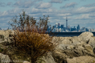 view of CN Tower across Lake Ontario from Jack Darling park in Mississauga