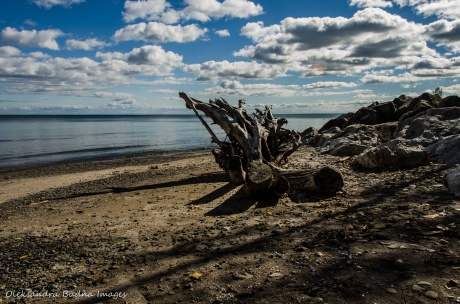 driftwood on Lake Ontario