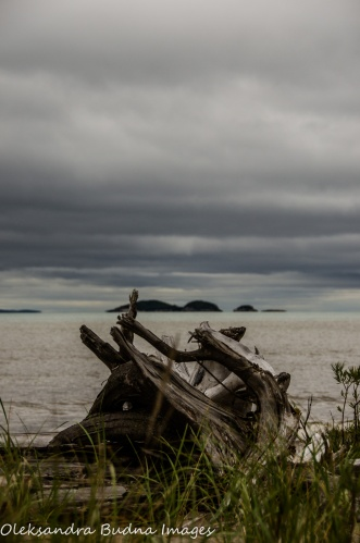 driftwood on the beach in Neys Provincial Park