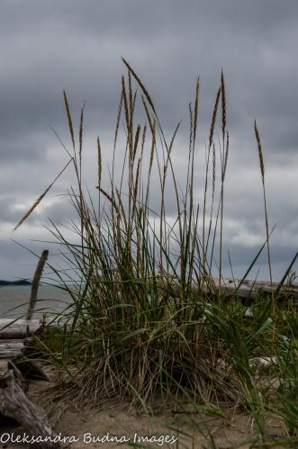 grass on the beach in Neys Provincial Park