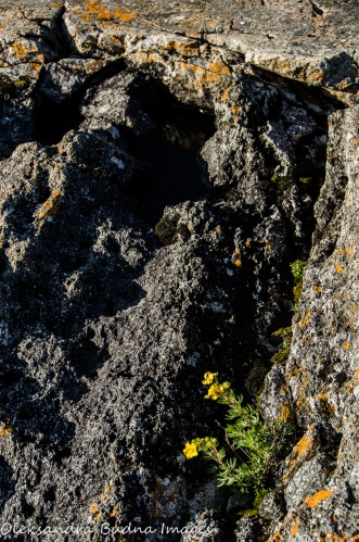 volcanic rock in Neys Provincial Park