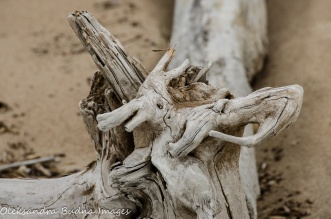driftwood in Neys Provincial park