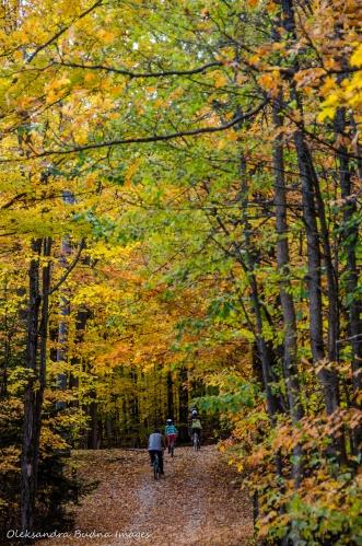 biking in Restoule in the fall