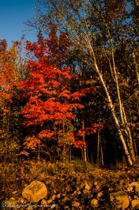 fall foliage in Restoule Provincial Park