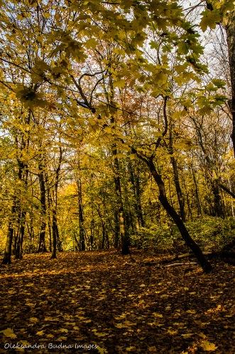 High Park in November