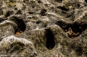 rocks at Rattlesnake Point