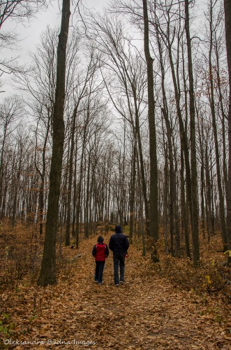 Walking through the woods at Rattlesake Point Conservation Area