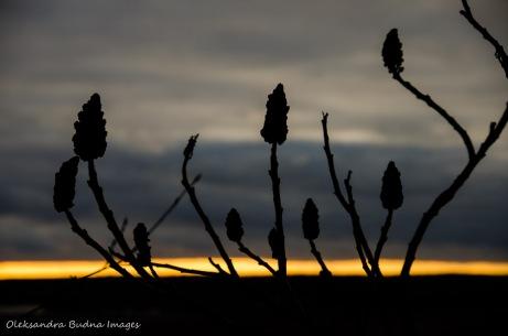 setting sun at Rattlesnake point