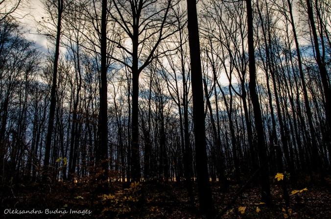 forest at Rattlesnake Point