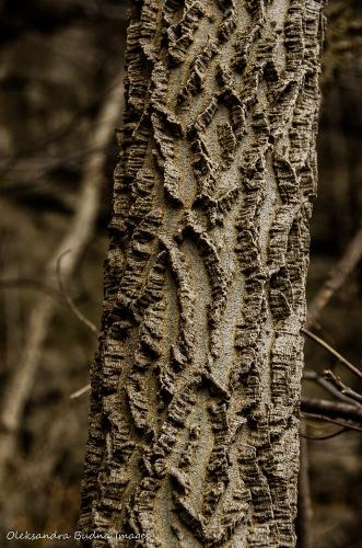 hackberry tree at Rattlesnake Point