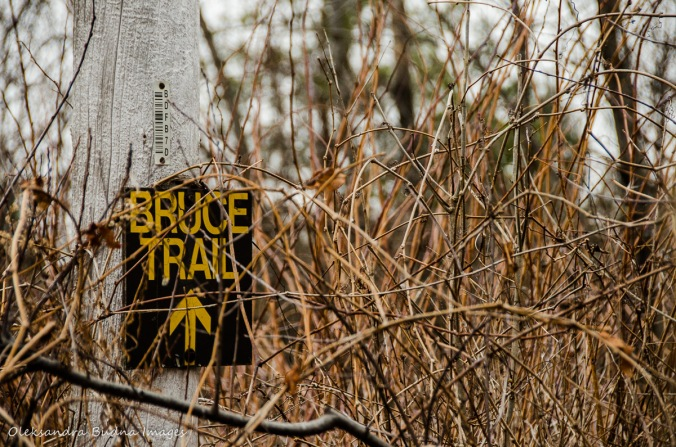 Bruce trail marker at Forks of the Credit Provincial Park